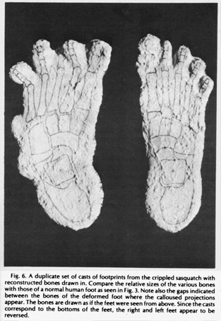 bigfoot footprints