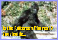 Patterson Film Analysis